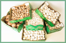 Bulk Conventional Mushrooms