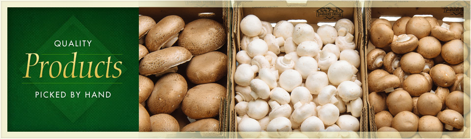 variety of organic mushrooms in bulk boxes